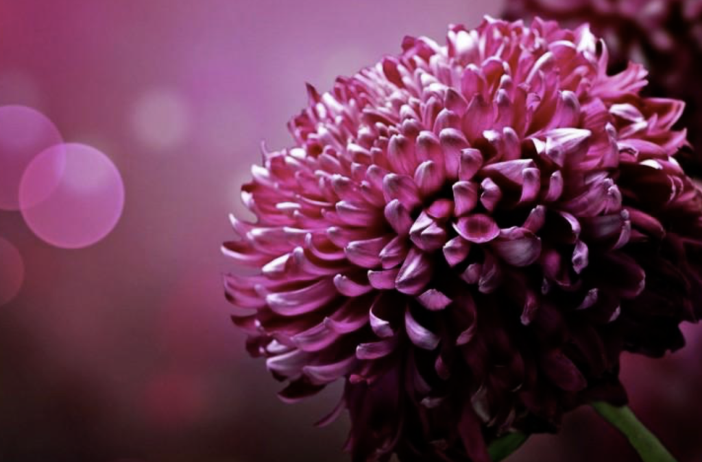 乳がんの症状③わきの下のしこりや痛み